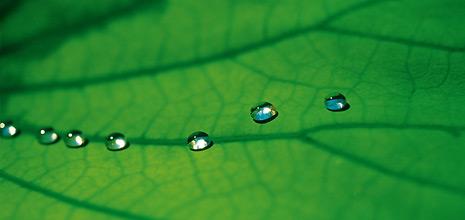 Προϊόντα StoLotusan Έρευνα και εξέλιξη με πρότυπο την φύση